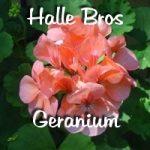 Halle Bros.Geranium